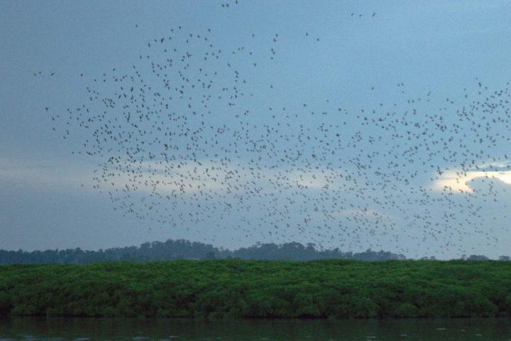 Birds flying in Baratang island