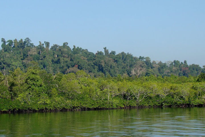 Brilliant Mangrove Forest at Baratang Island