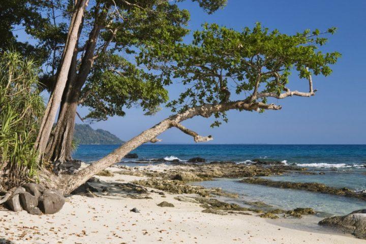 Coastal rainforest, Havelock Island, India